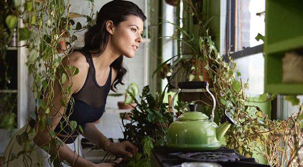 Welche Zimmerpflanzen filtern Schadstoffe und sorgen für gute Raumluft