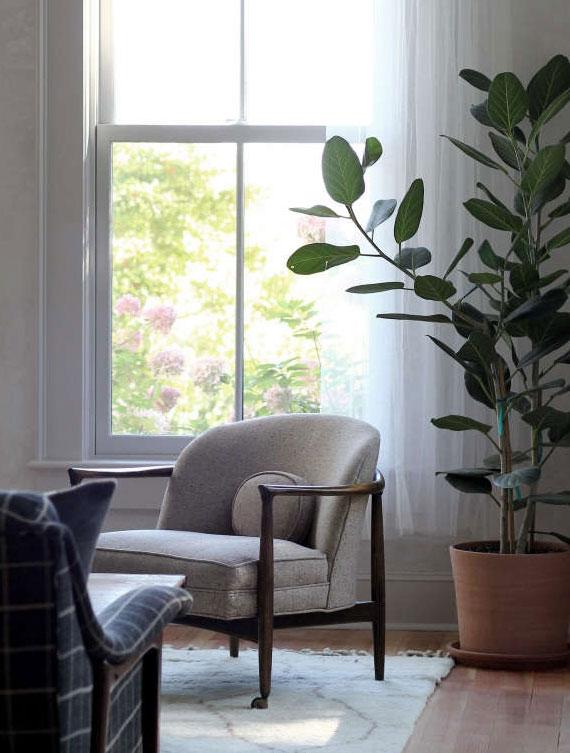 welche zimmerpflanzen dienen als Luftreiniger und schöne Zimmerdeko zugleich